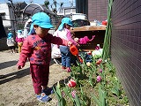 small-tulip-P1200186